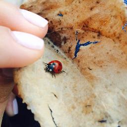 lucky ladybug freetoedit