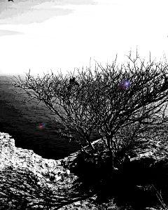 freetoedit blackandwhite color trees tree