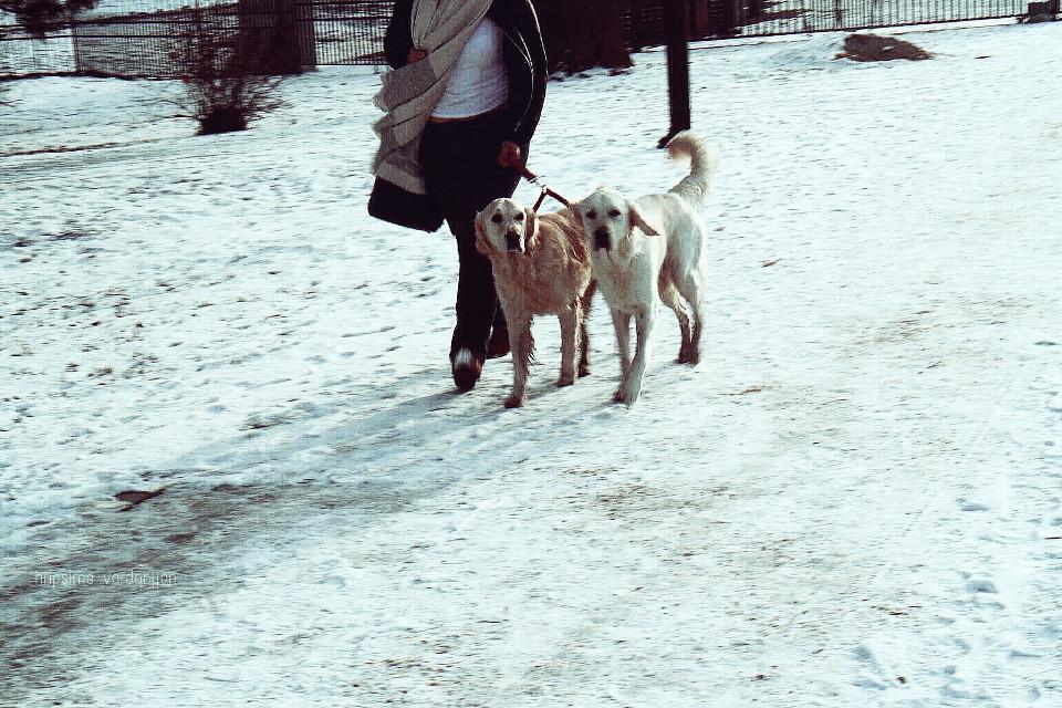 #pets #pets&animals #dogs #white #together #winter #snow ❄️ #people #random #photography #streetphotography #streetart #friends #beautiful #cute #picsart #FreeToEdit