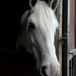 freetoedit horses nofilter agriturismopalozzo cepagatti