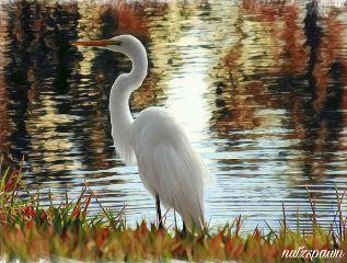 myphoto paint edit egret grass