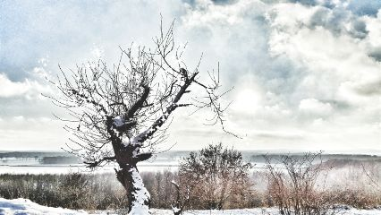 tree winter snow landscape photography
