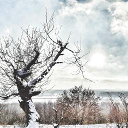 freetoedit tree winter snow landscape