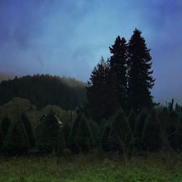 trees hills green vegetation fog freetoedit