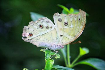 photography nature animals butterfly macro