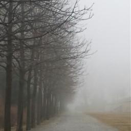 freetoedit pcfog fog mist winter dpcsilhouettesoftrees pcwinterparks pcfoggy pcbadweather