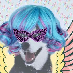freetoedit crazydog carnaval2017 themask dog
