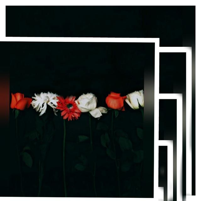 #FreeToEdit #flower # line # order #red # white #redandwhite #sunderland #sweet
