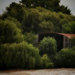 riverside river oldbuilding forest forestlife