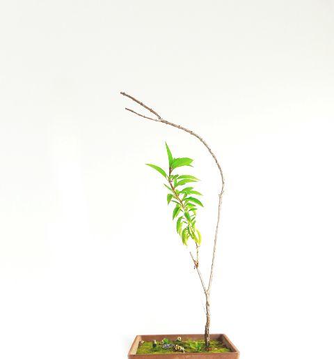 freetoedit minimal plant minimalism