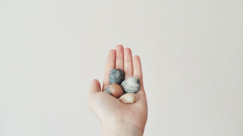 photography minimalism minimalist colorful shells