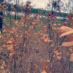 freetoedit forestfire leaves deadtree golden