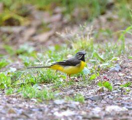 bird spring springtime life lifeisbeautiful freetoedit