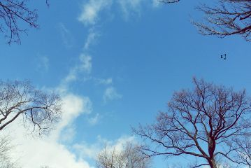 nature blue trees sky clouds