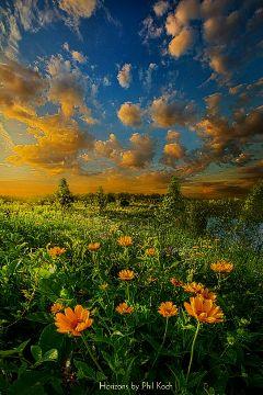 freetoedit remixit colorful flower emotions