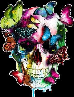 skull colorful butterflies freetoedit