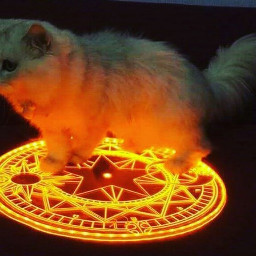 freetoedit circleart cats starcircle yellowcircle
