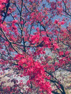 springtime lightcrosseffect flowers tree minimalism freetoedit