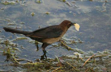 bird photography pets nature