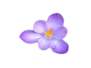 flower freetoedit